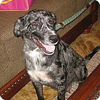 Adopt A Pet :: Maia - Richmond, VA
