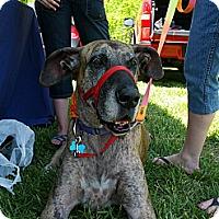 Adopt A Pet :: Chloe - Virginia Beach, VA