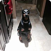 Adopt A Pet :: Tucker - Fort Worth, TX