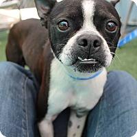 Adopt A Pet :: Grand Master Bernie D! - Woodland, CA
