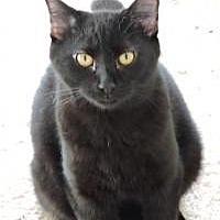 Adopt A Pet :: Abe - McKinney, TX