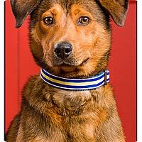 Adopt A Pet :: Homer - Owensboro, KY