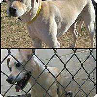 Adopt A Pet :: Bubbles - Alamogordo, NM