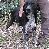 Adopt A Pet :: Ozarks - Providence, RI