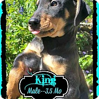 Adopt A Pet :: King meet me 11/14 - Manchester, CT
