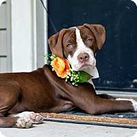 Adopt A Pet :: Gretchen - Baton Rouge, LA