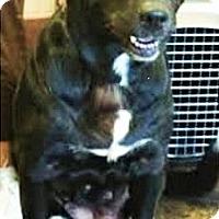 Adopt A Pet :: Gabby - Davenport, IA