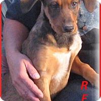 Adopt A Pet :: Reo-Adoption Pending - Marlborough, MA