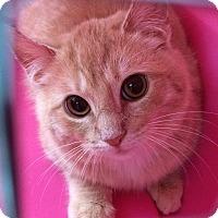 Adopt A Pet :: Sawyer - Wayne, NJ