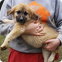 Adopt A Pet :: Clementine - Stamford, CT