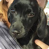 Adopt A Pet :: Doc - Henderson, NV