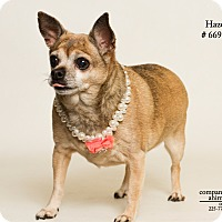 Adopt A Pet :: Hazel (Foster Care) - Baton Rouge, LA