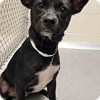 Adopt A Pet :: ADOPTED!!! Moon - Plainfield, IL