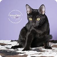 Adopt A Pet :: Buffy - Apache Junction, AZ