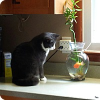 Adopt A Pet :: George (COURTESY POST) - Baltimore, MD
