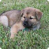 Adopt A Pet :: Jacob - Friendswood, TX