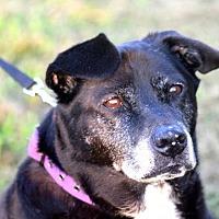 Adopt A Pet :: Sadie - McKenzie, TN