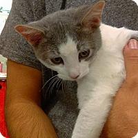 Adopt A Pet :: Zeus - Lancaster, CA