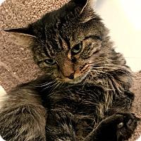 Adopt A Pet :: Pookie - Hanna City, IL