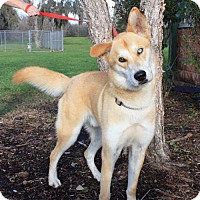 Husky Mix Dog for adoption in Lake Jackson, Texas - Link