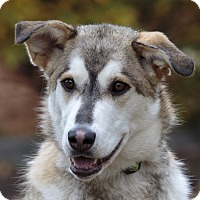Adopt A Pet :: PEECHES - Ile-Perrot, QC