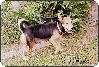 German Shepherd Dog/Cattle Dog Mix Dog for adoption in Pittsburgh, Pennsylvania - Shasta