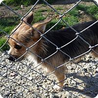 Adopt A Pet :: Tito - Transfer, PA