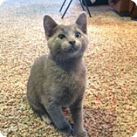 Adopt A Pet :: Puff - McHenry, IL