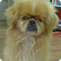 Adopt A Pet :: Frazier - Manning, SC