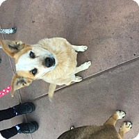Adopt A Pet :: Maizley - Glendale, AZ