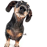 Adopt A Pet :: Kona - Tustin, CA