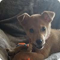 Adopt A Pet :: Isaac - New Oxford, PA