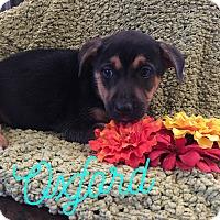 Adopt A Pet :: THE  SUPER SEVEN - HAGGERSTOWN, MD