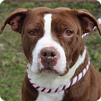 Adopt A Pet :: RAYNETTE - Red Bluff, CA
