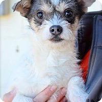 Adopt A Pet :: Scout - Midland, TX