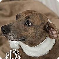 Adopt A Pet :: Marple - Tallahassee, FL