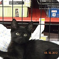 Adopt A Pet :: Midnight - Riverside, RI