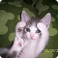 Adopt A Pet :: Selena - Orlando, FL