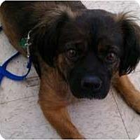 Adopt A Pet :: Maggie - Hales Corners, WI