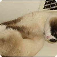 Adopt A Pet :: Aspen - Delmont, PA