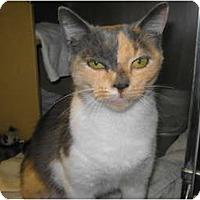 Adopt A Pet :: Tippy - Warminster, PA
