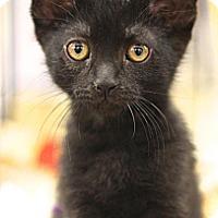 Adopt A Pet :: Kristoff - Sacramento, CA