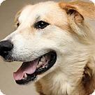 Adopt A Pet :: Wooten