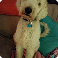 Adopt A Pet :: Lake Hiawatha NJ - Emmett - New Jersey, NJ