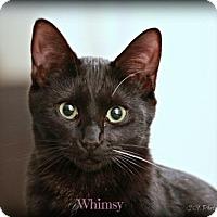 Adopt A Pet :: Whimsey - Glendale, AZ