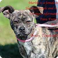 Adopt A Pet :: Marble - Buchanan Dam, TX