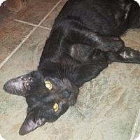 Adopt A Pet :: Ellie Mae - Glocester, RI