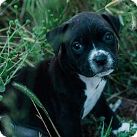 Adopt A Pet :: Jan $250 - Seneca, SC