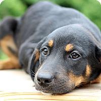 Adopt A Pet :: Gigi - Waldorf, MD