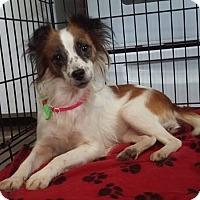 Adopt A Pet :: Cinderella - fort wayne, IN